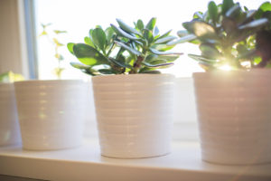 A touch of greenery to add to the interior design involved in home staging a house.